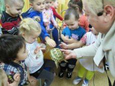 Первое знакомство малышей с черепахой